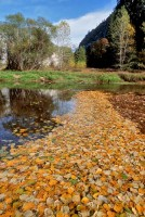 Autumn-Leaves-Merced-River-Yosemite-Valley-Golden-Foliage-California