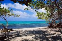 Beach, Grand Cayman, Mangroves, Tropics, Tropical, Blue, Green, Ocean, Sky, Clouds