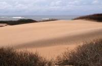 Dunes - Ano Nuevo