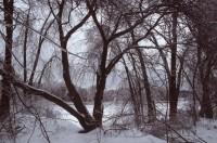 Frozen Trees, Freezing Rain, Winter, Snow, Sudbury River, Massachusetts