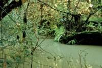 Navarro River - Mendocino, California, Green, Forest, Ferns