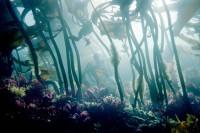 Underwater, Eel Cove, SCUBA, California, Kelp