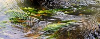 Big River, Mendocino, Abstract, Motion, Flowing