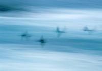 Blurred Birds