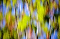 Brooklyn Botanical Blur