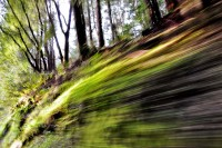 Redwoods, Driving,Abstract, Blur, Action Landscape, Green, Car