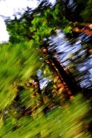 Redwoods, Abstract, Blur, Blurred, Motion