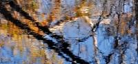 Reflection, San Lorenzo River, Felton, Santa Cruz, California