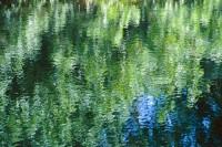 Wailua Reflection